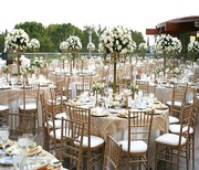 Exquisite Chiavari Chairs Direct