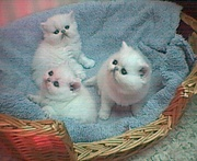 Sparkling kitten for a loving home